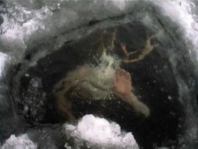 Person Trapped Under Ice