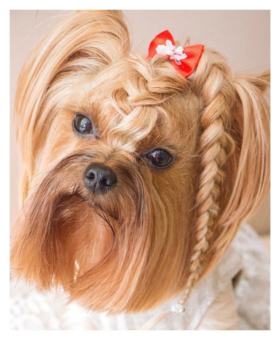 These 15 Dogs Have Way Cooler Hairstyles Than You